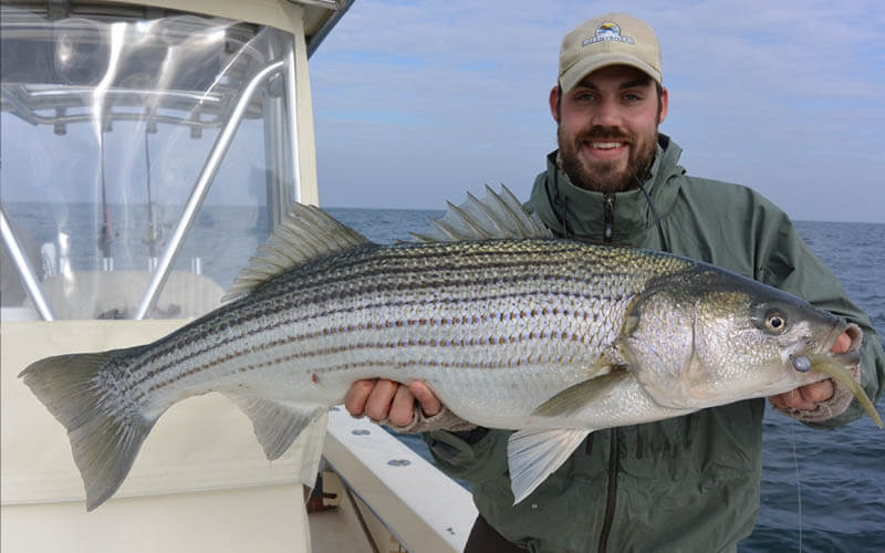 An image of an angler with a striped bass on a Chesapeake Bay Fishing Charter adventure with Tidewater Charters.